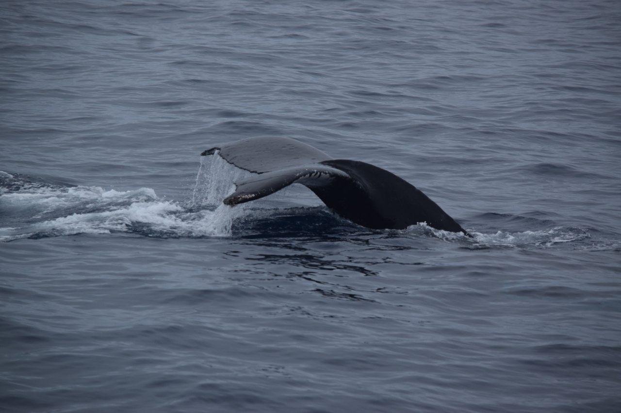 Whale Watching【沖縄マリンスポーツ専門店★水納島マーメイド】