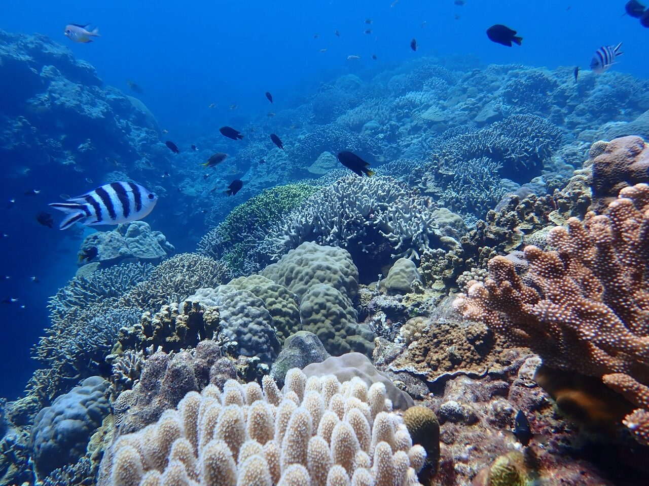 under water world🐠【沖縄のマリンスポーツ専門店☆水納島マーメイド】